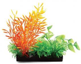Композиция из аквариумных растений Laguna
