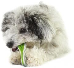 Игрушка для собак Petstages Finity Dental Chew зубная щетка