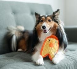 Игрушка для собак ОН Invinc Mini Цыпленок 17 см без наполнителя
