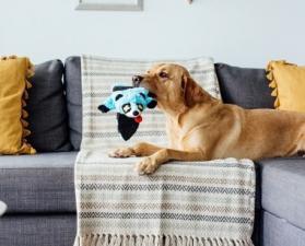 Игрушка-шкурка для собак ОН Roadkillz Енот 50 см голубой